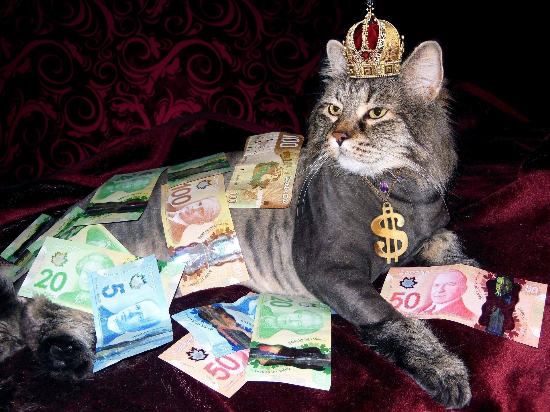 Canadian Money Cat